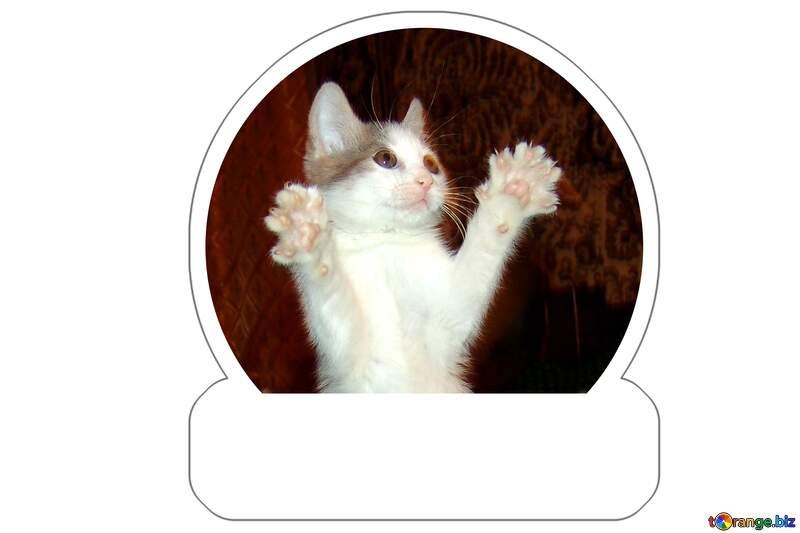 Cat Sticker №273