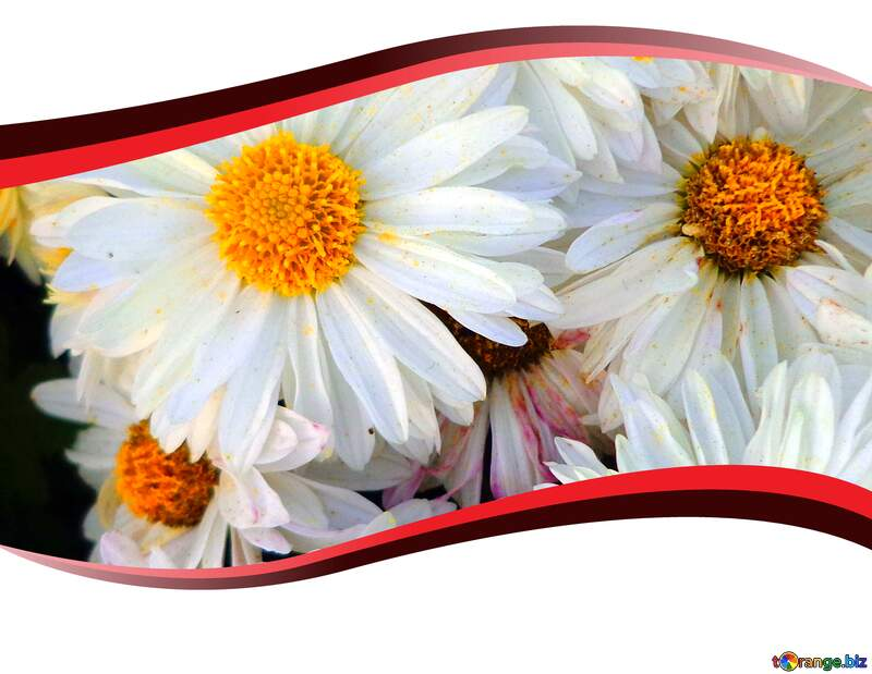 Flowering plant floral design wildflower clipart editing background №14165