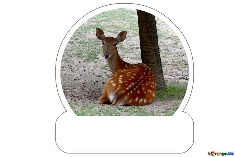 Deer Sticker №45907
