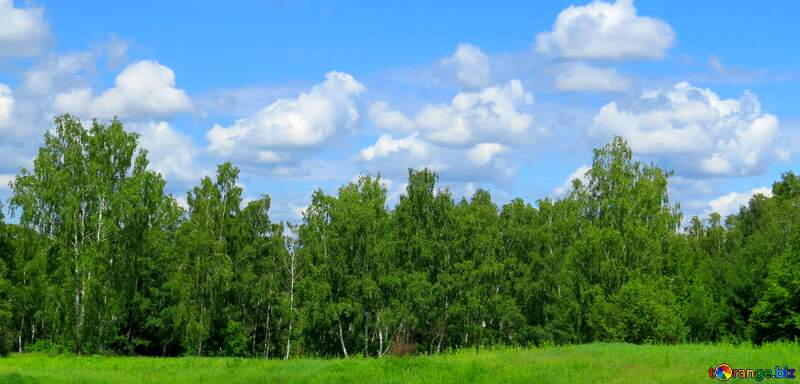 forest and sky cover №24733