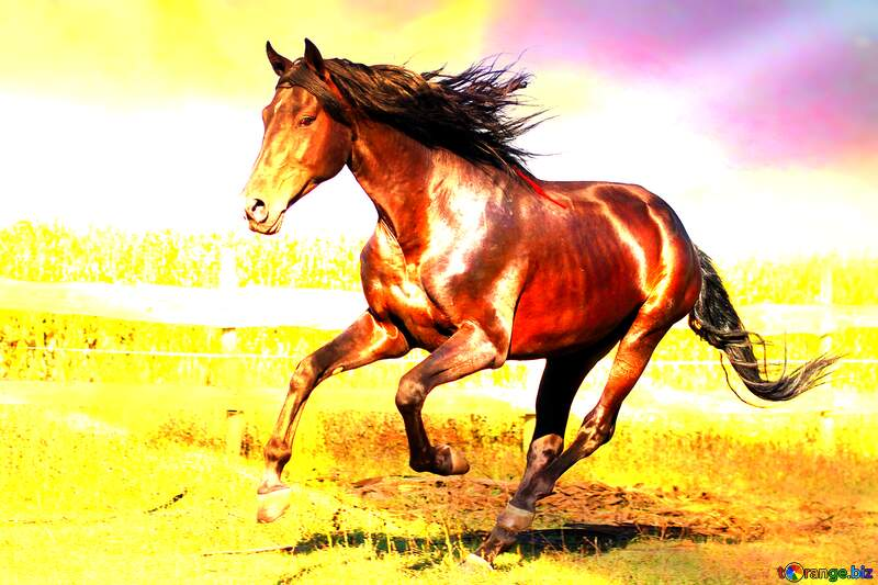 Horse art background №36664