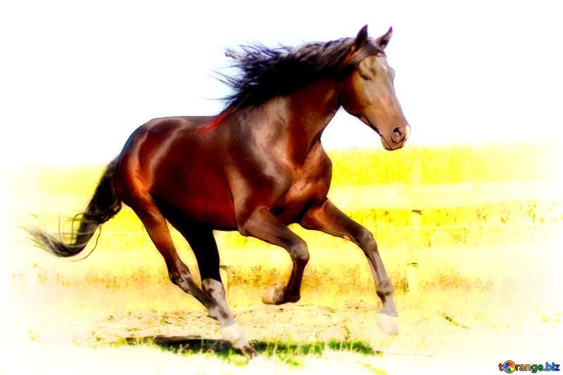 horse white blur frame №36664