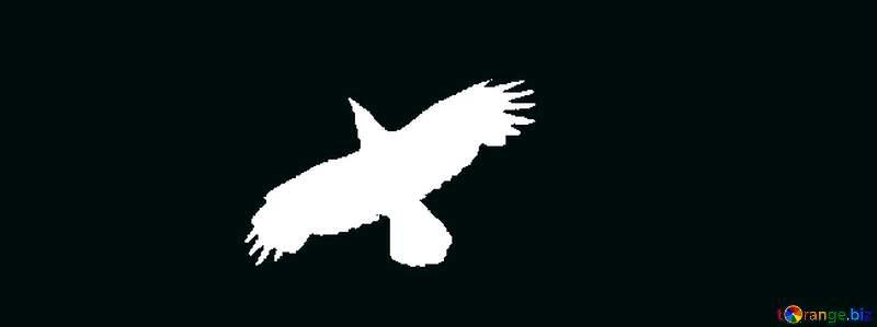 White Raven flying №573