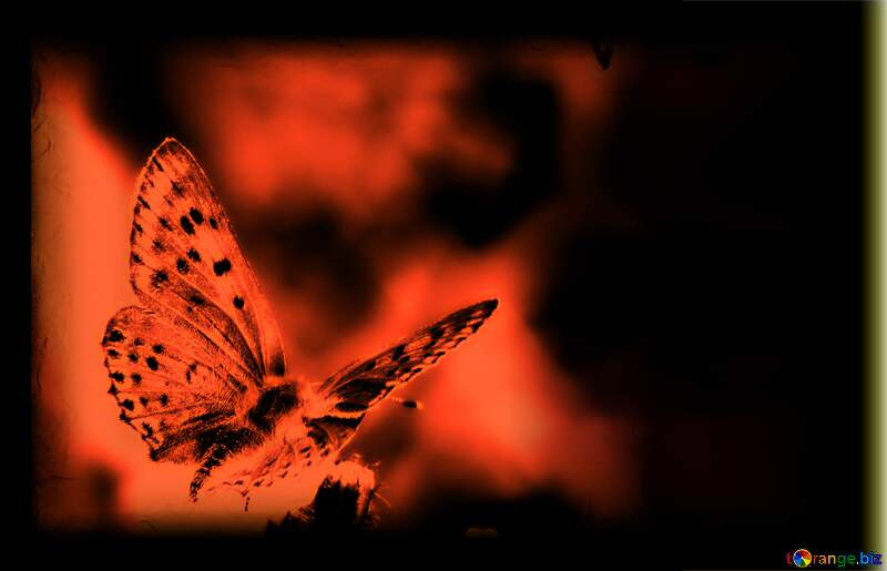 butterfly background №25913