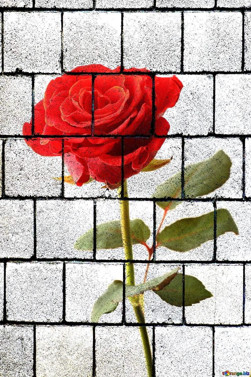 A rose flower  wall blocks №17043
