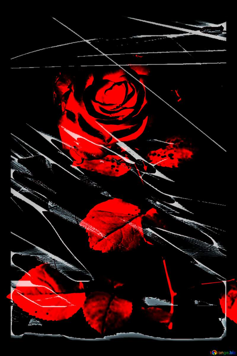Tragedy rose flower №17031