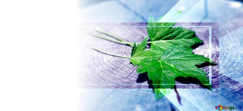 Green leaf  template №33245