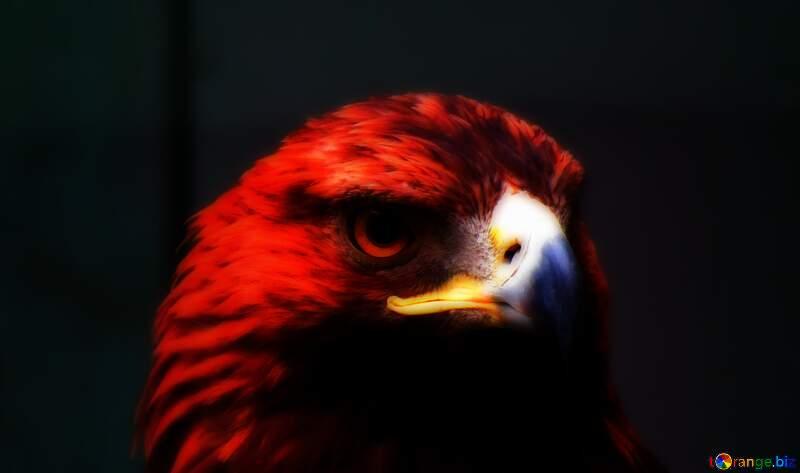 eagle background №45229