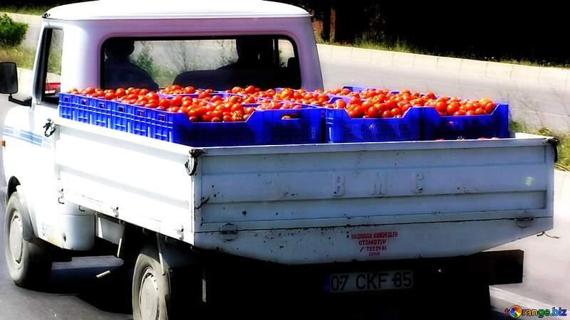 Transportation of tomatoes №21202