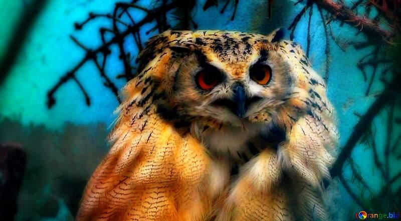Owl bird wildlife terrestrial animal colorful blurry head brown blue №46063