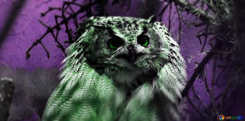 A bird sitting on top of an owl №46063