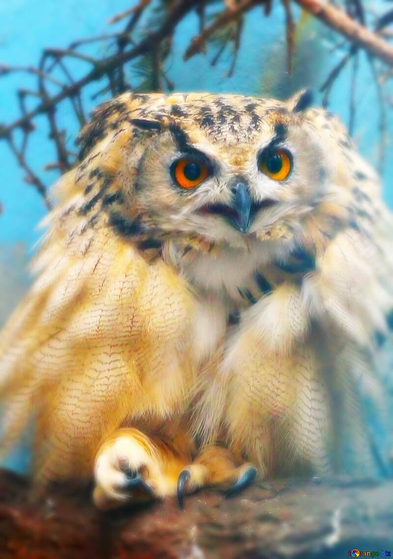 Owl bird №46063