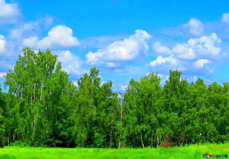 Nature  forest and sky №24733