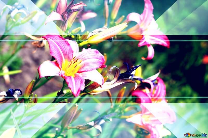 Nice petal flower daylily invitation template frame background №46807