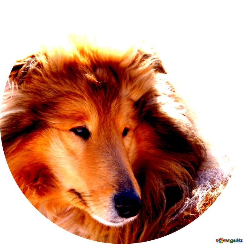 Ginger Dog profile picture №717