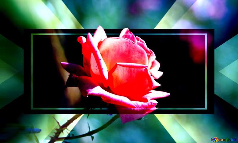 Pink rose flower infographic template banner design №4210