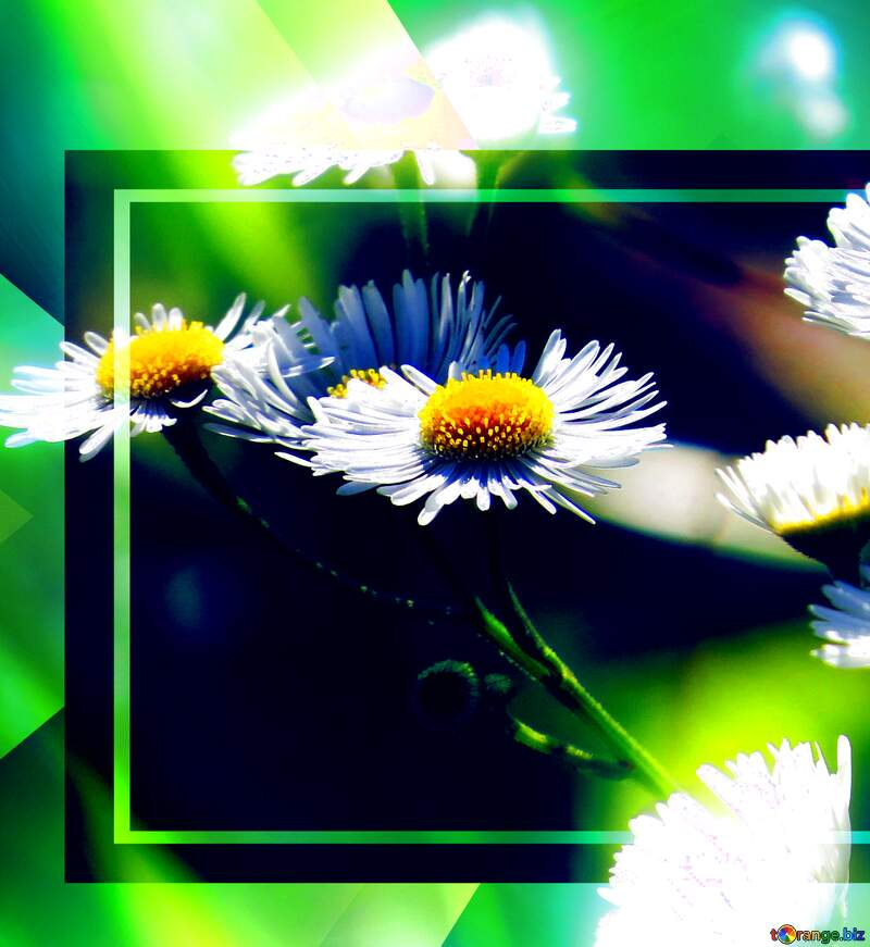 A close up of a green flowers screen nature rectangle advertising greeting graphic design daisy family №34394