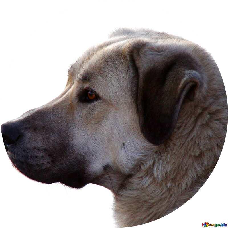 Dog frame circle №2259