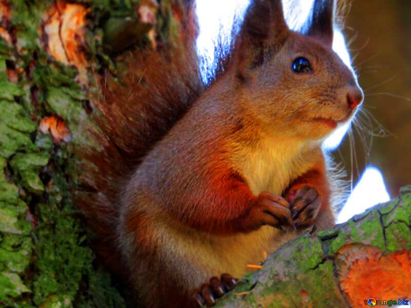 Sad squirrel blur frame №35724