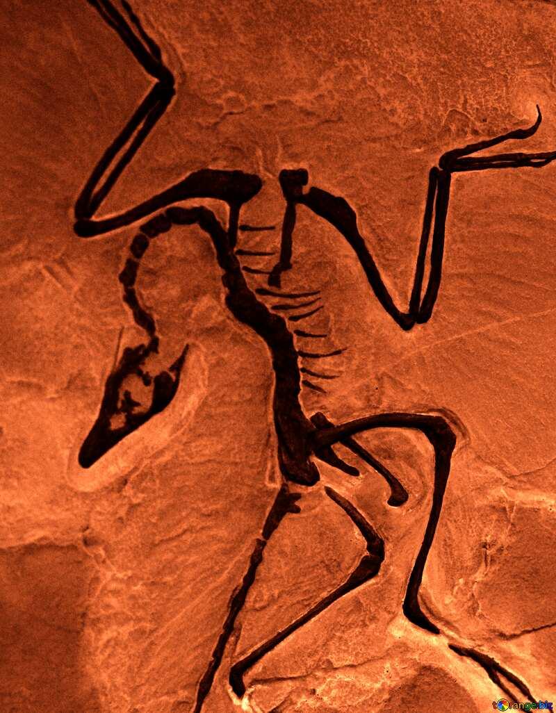 animal Skeleton №39357