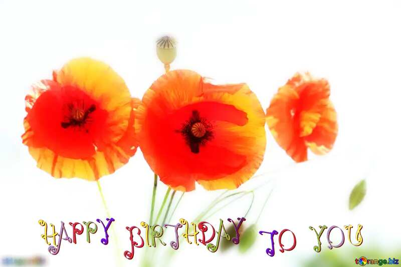 happy birthday card Bright poppies flowers №37137