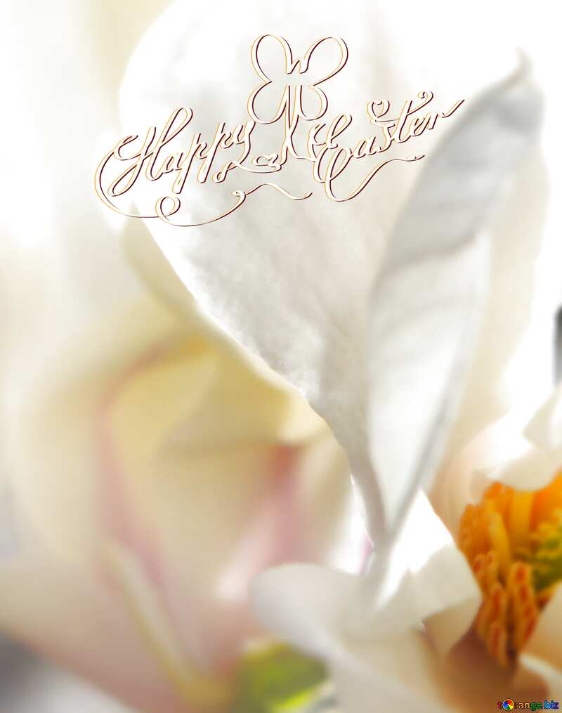 Background white happy easter flowers №39721