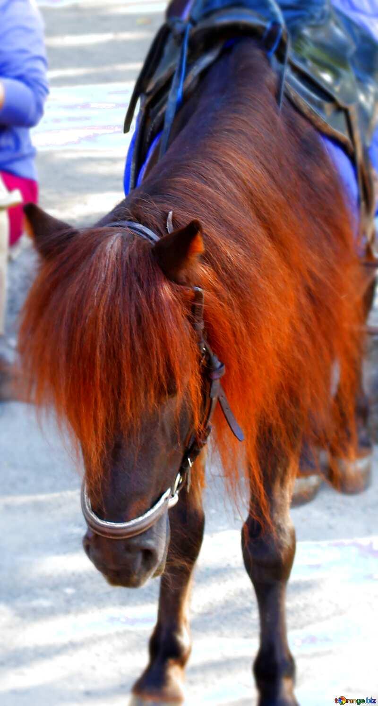 Sad pony №41760