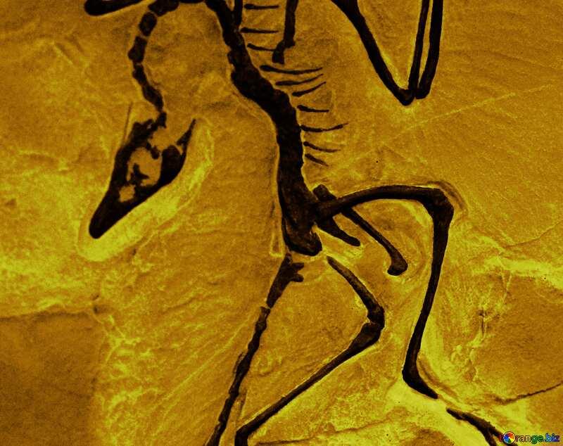 Cover. Skeleton fossil animal in stone. №39357