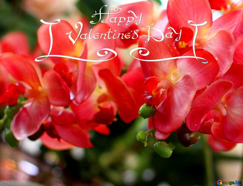 happy valentines day orchids flower №47105