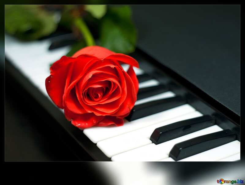 piano keys with Rose Flower №7198