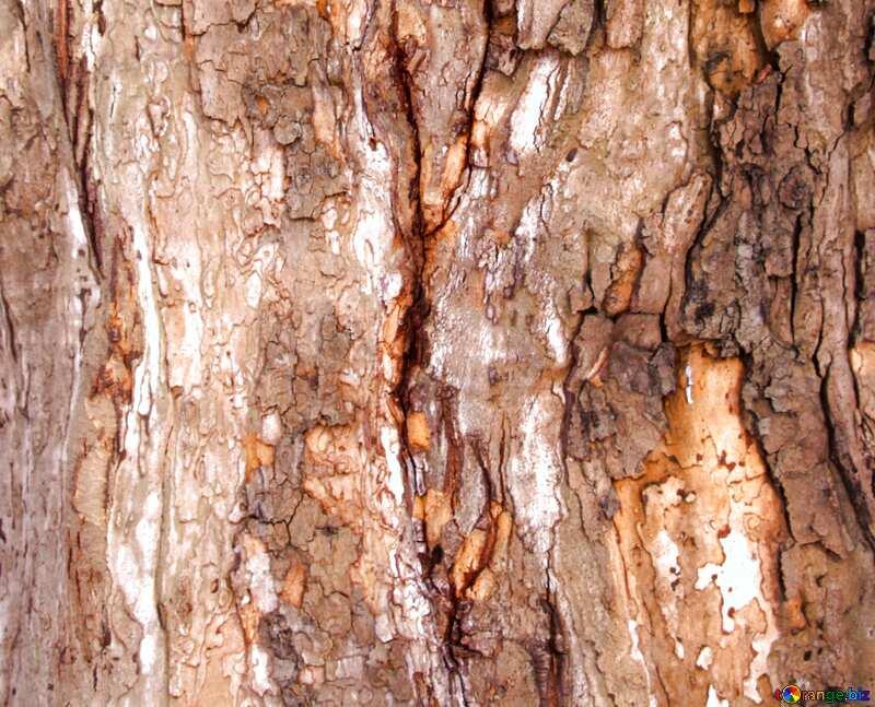 bark texture №7567