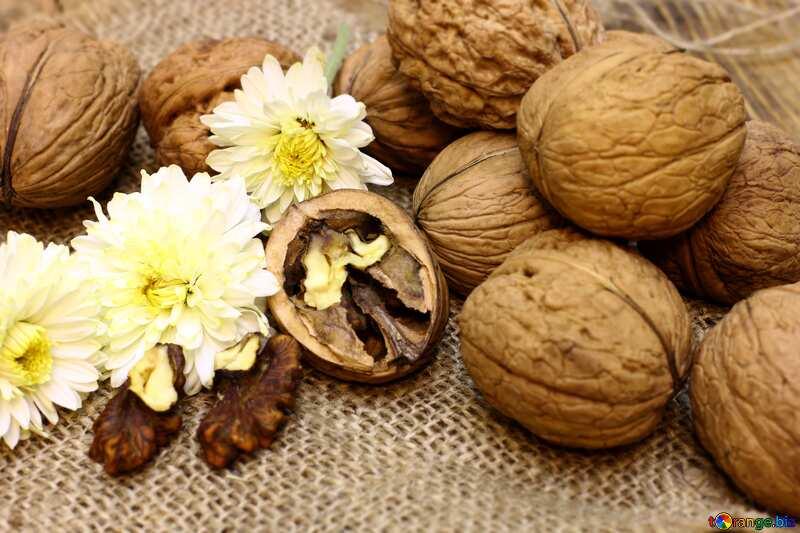Walnuts blurring №46225