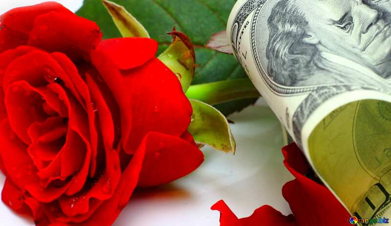 的封面 美元和玫瑰的心. №16836