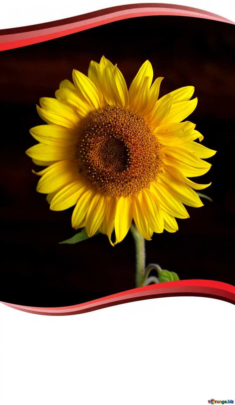 Sunflower flower frame card design №32798