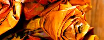 The effect of light. Vivid Colors. Fragment.