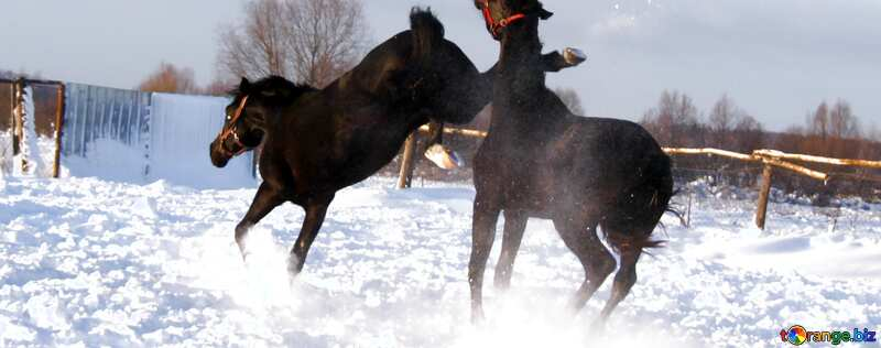 Обложка. Конь лягается. №3959