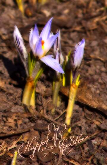 The effect of hard light. Very Vivid Colours. Fragment. Happy Easter card.