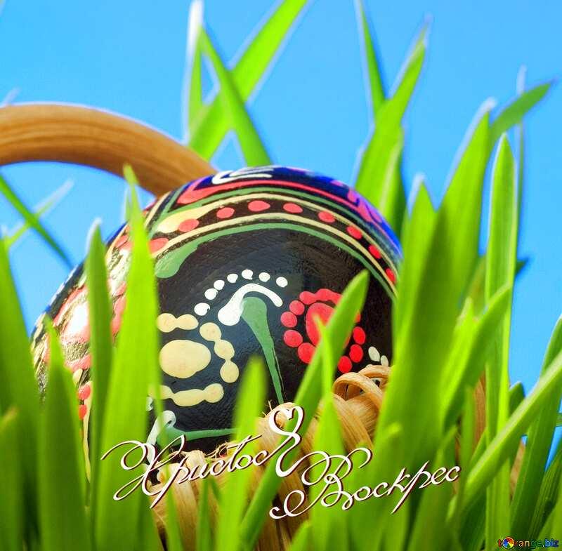ярко раскрашенное яйцо на фоне зеленой травы и неба №8194