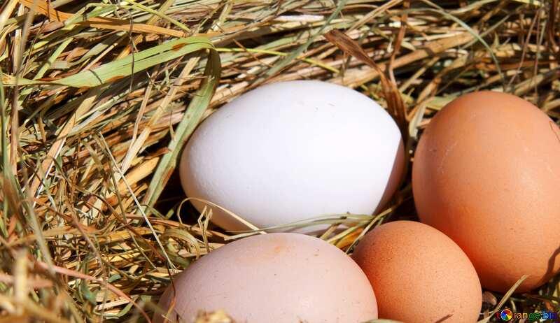 Abdeckung. Eier im Nest. №1069