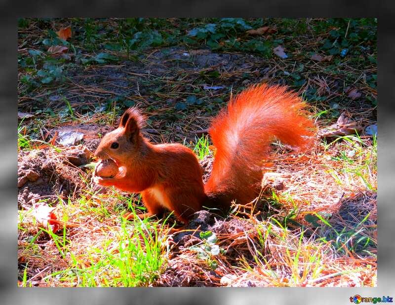 Squirrel fuzzy grey border №35723