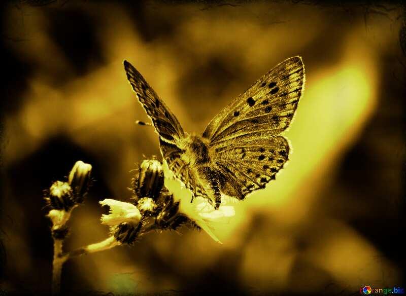 butterfly flying dark effect background №25913