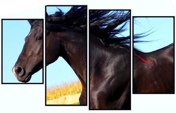 Die Wirkung der Spiegel. Die Wirkung der Kontrast. lebendige Farben. Bruchstück. Modular Bild mit einem hellen Hintergrund.