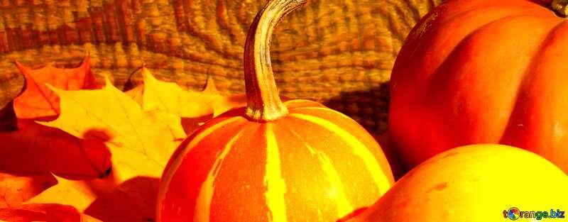 Abdeckung. Hintergrundbilder für desktop Kürbisse und Herbstlaub. №35421