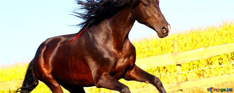 Abdeckung. Pferd. №36664