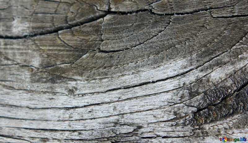 Abdeckung. Textur der Hündinnen auf dem Brett. №39915