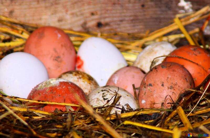 chicken eggs №773