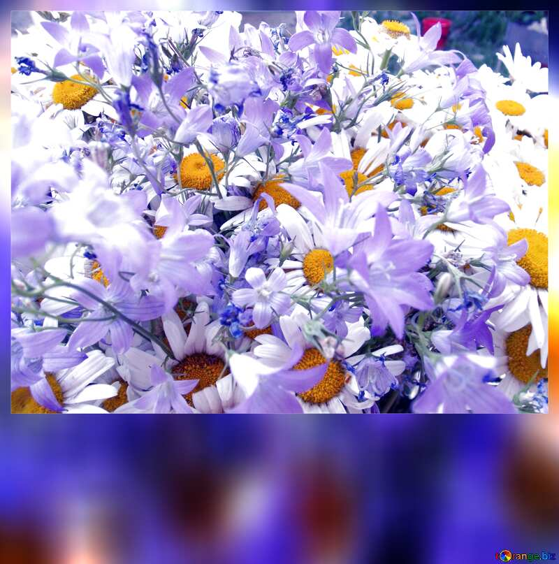 Bild mit Platz für Text. Blumenstrauß.  Gänseblümchen  und  Bell. №9802