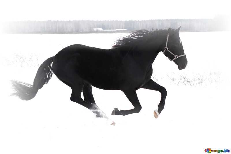 Horse running in the snow №18191
