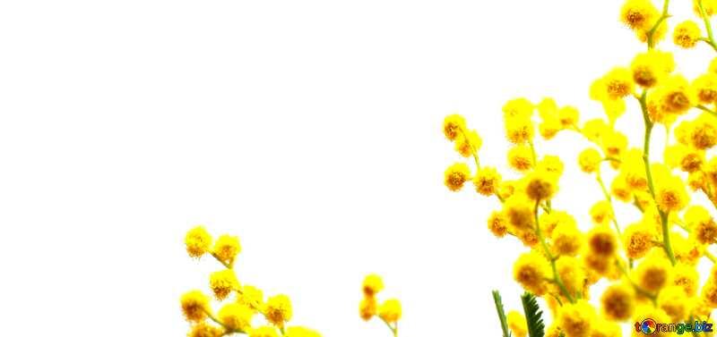 Couverture. Branche de mimosa. №20469