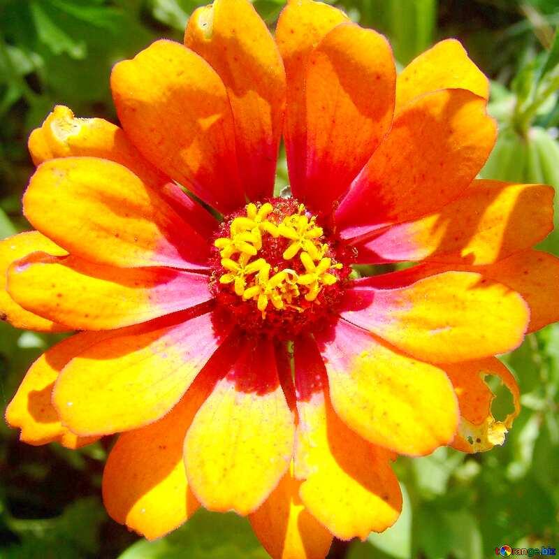 flower №3219